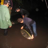 Liberación-de-tortugas-carey-Jiquilisco-039