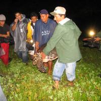 Liberación-de-tortugas-carey-Jiquilisco-051