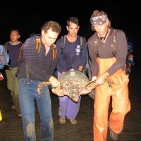 Liberación-de-tortugas-carey-Jiquilisco-114