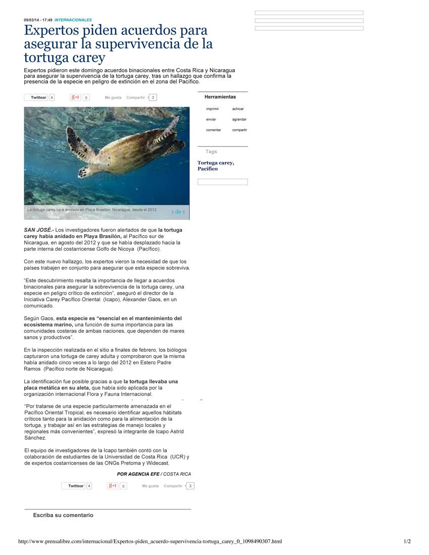Expertos-piden-acuerdos-para-asegurar-la-supervivencia-de-la-tortuga-carey-1